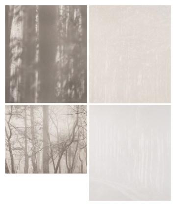 Tree Series (4점)