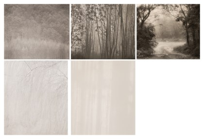 Tree Series (5점)