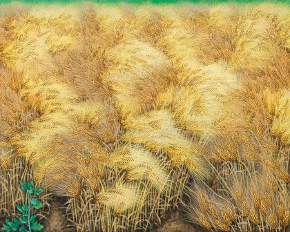 Golden Barley Field - Swaying in the Wind I